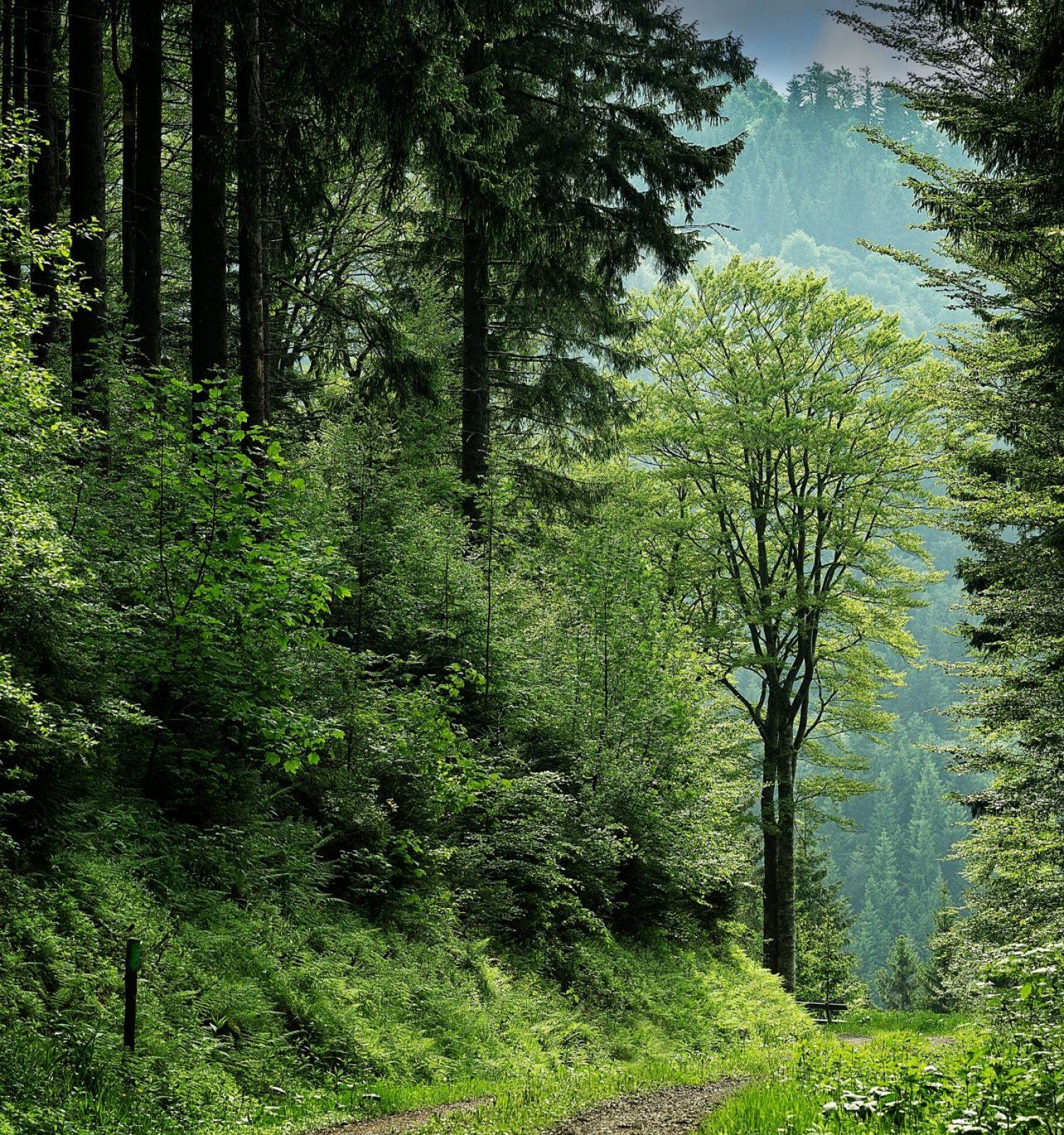 countryside-daylight-environment-109391